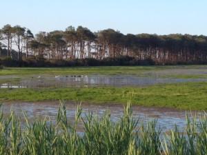 marsh (2)